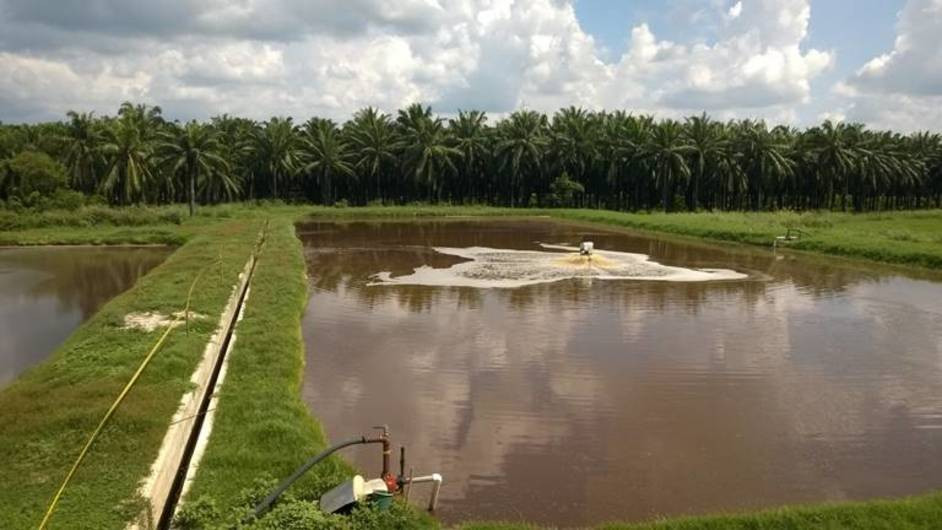 Palm Oil Mills